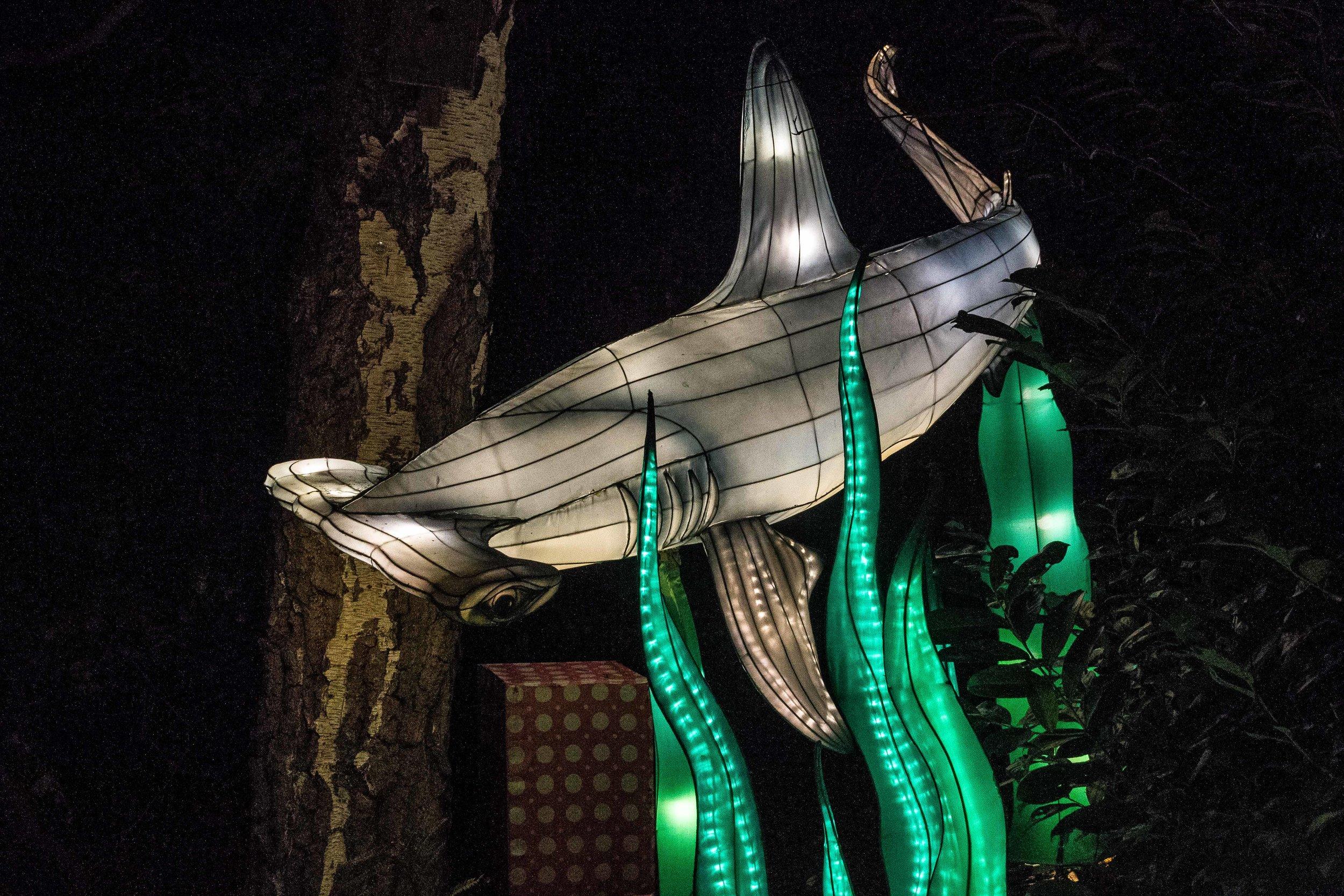 Wild-Nights-Dublin-Zoo2 (2 of 19).jpg