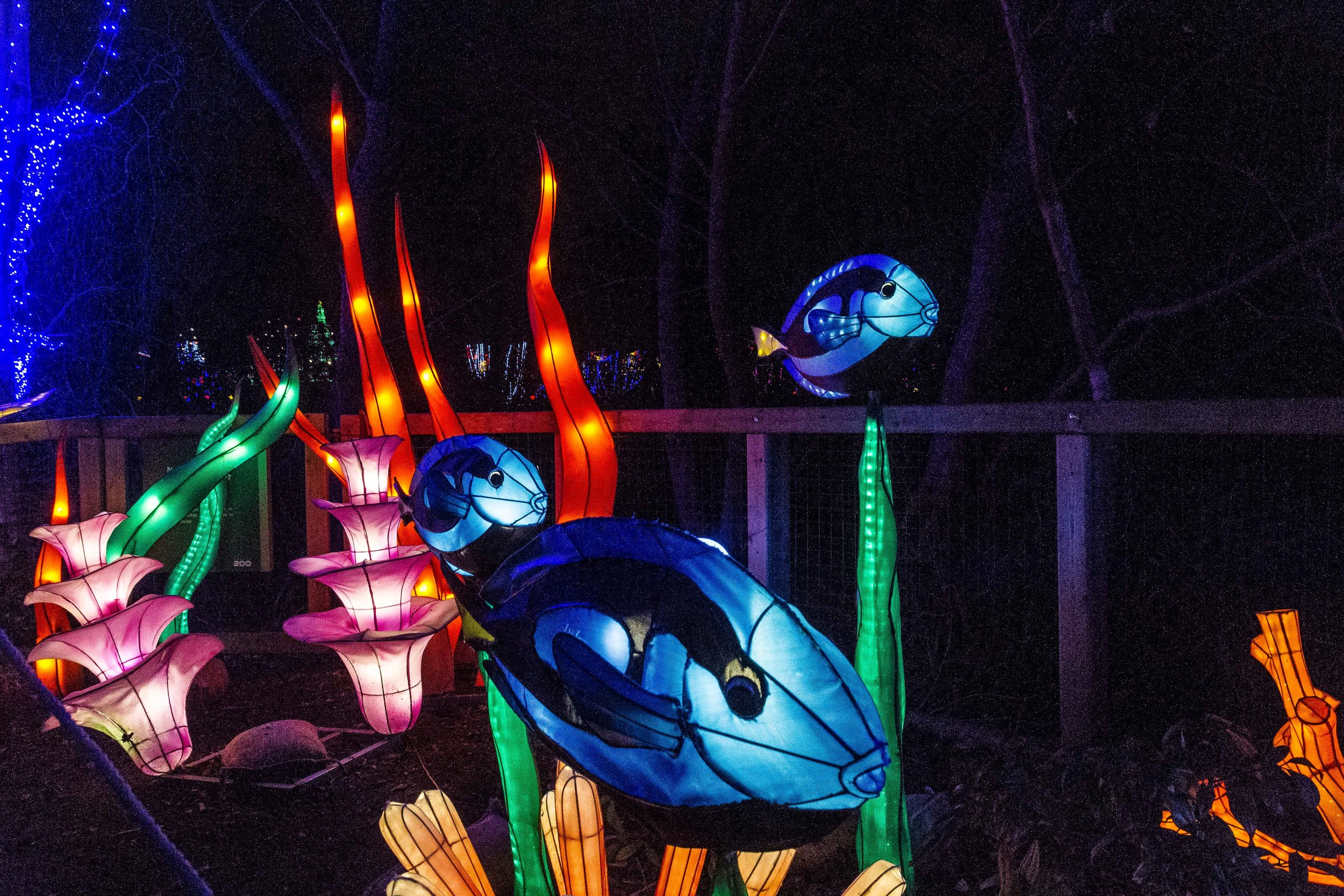 Wild-Nights-Dublin-Zoo2 (3 of 19).jpg