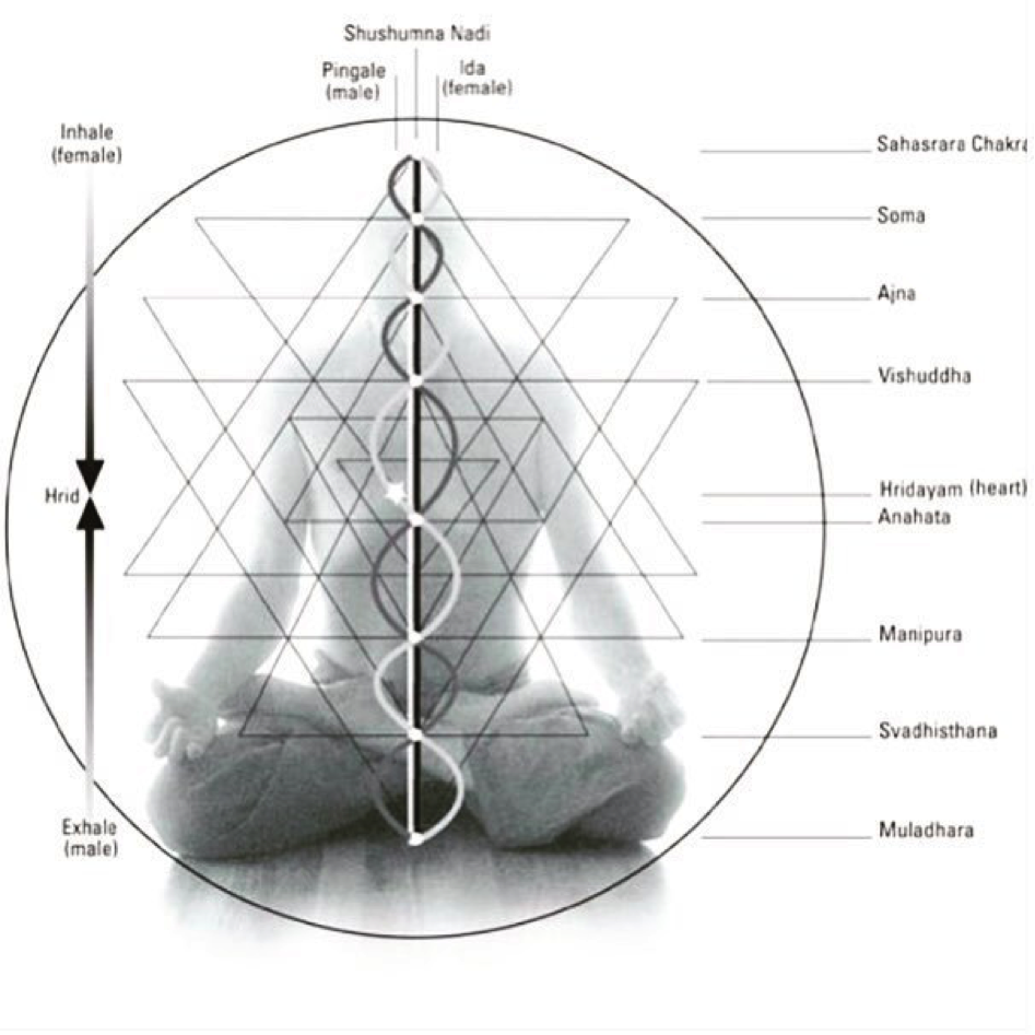 THE HRIDAYA IS WHERE ALL OPPOSITES MEET.FROM 'YOGA OF HEART: THE HEALING POWER OF INTIMATE CONNECTION,' BY MARK WHITWELL