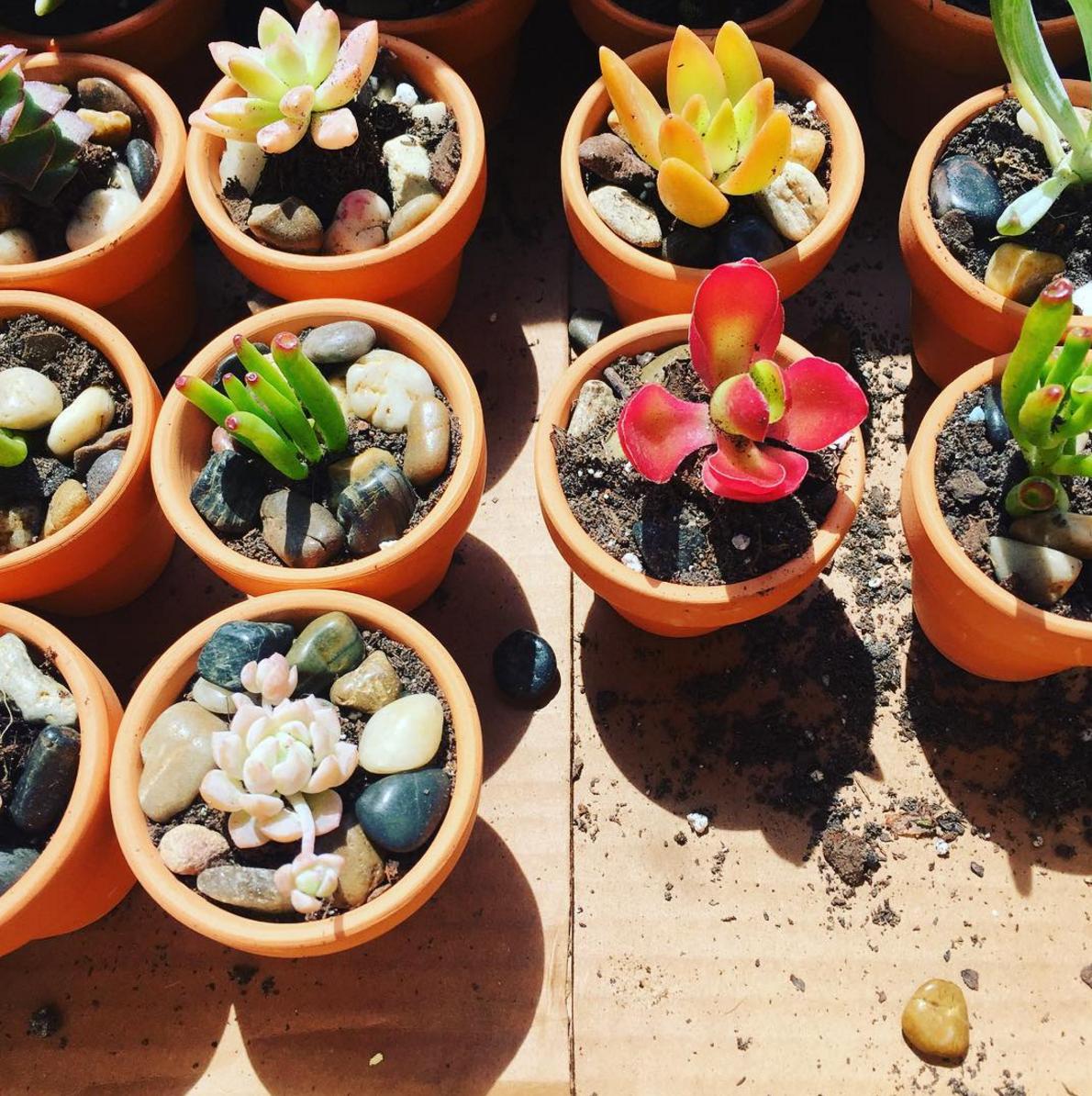 succulents-norfolk-va.png