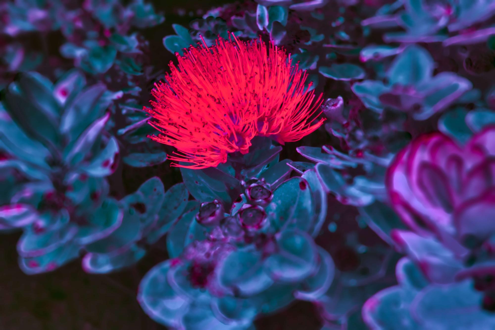20110206 - 09-51-08_AuroraHDR2019-edit.jpg