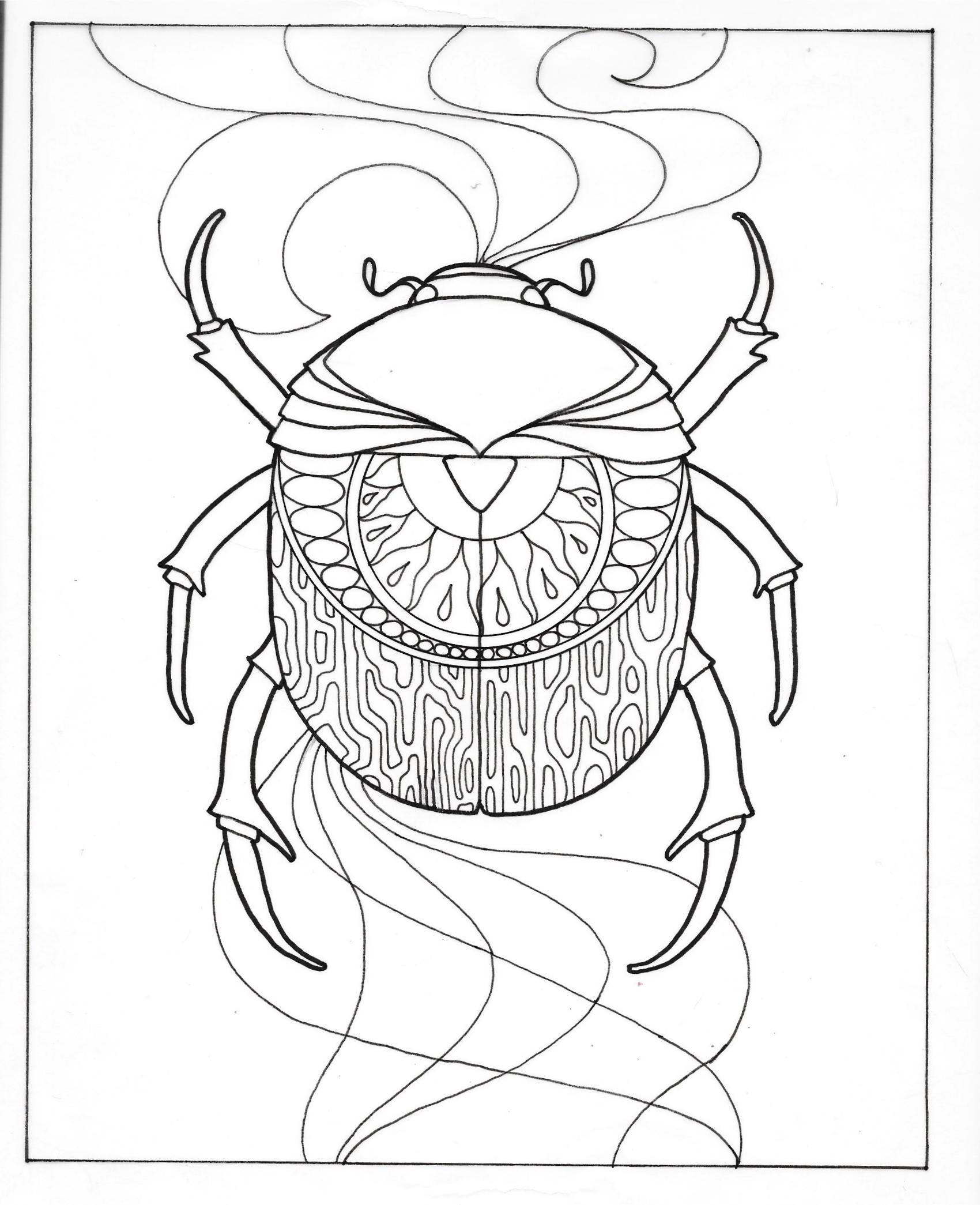 cp beetle.jpg