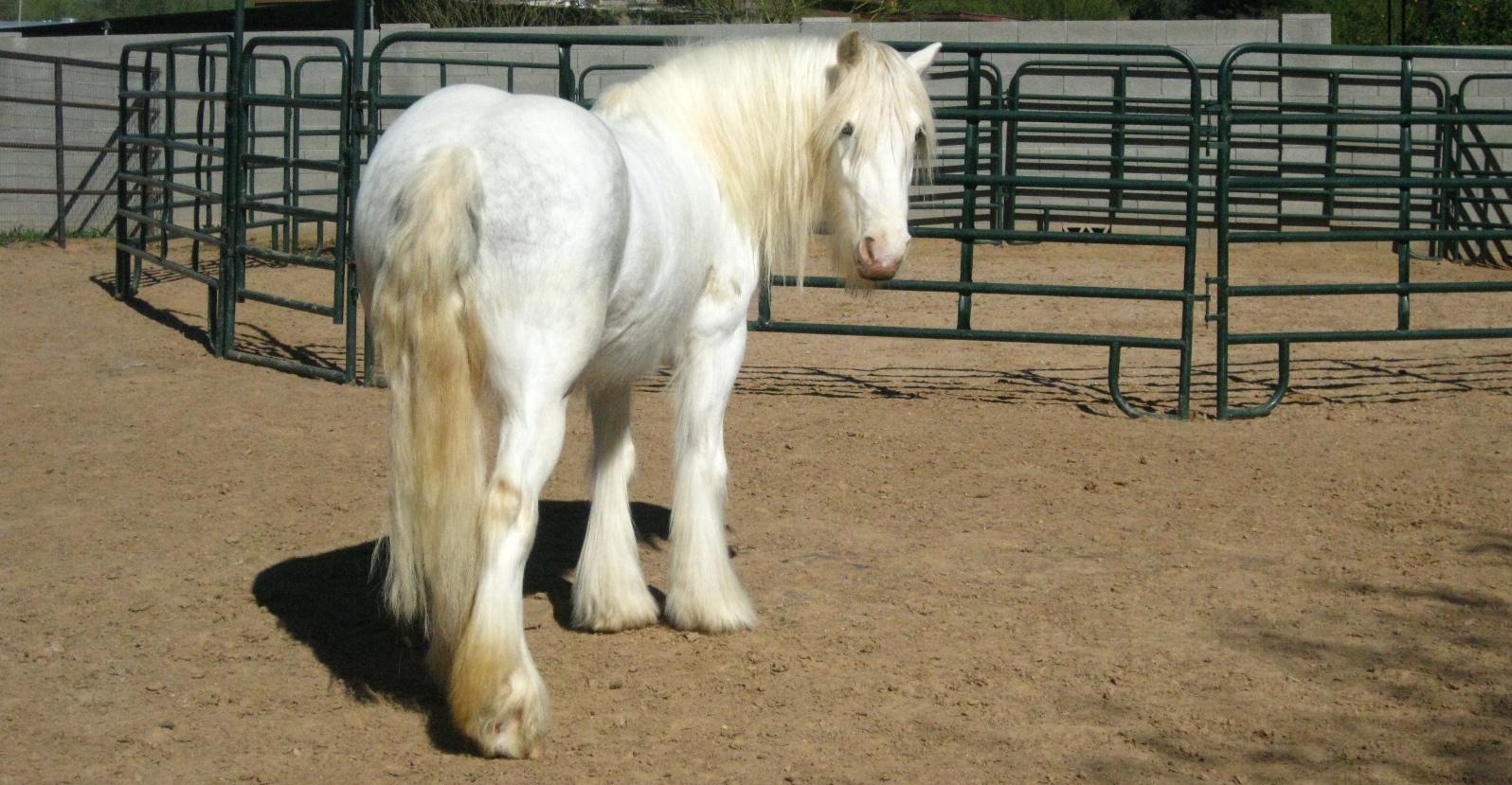 Chroi unicorn pose.jpg