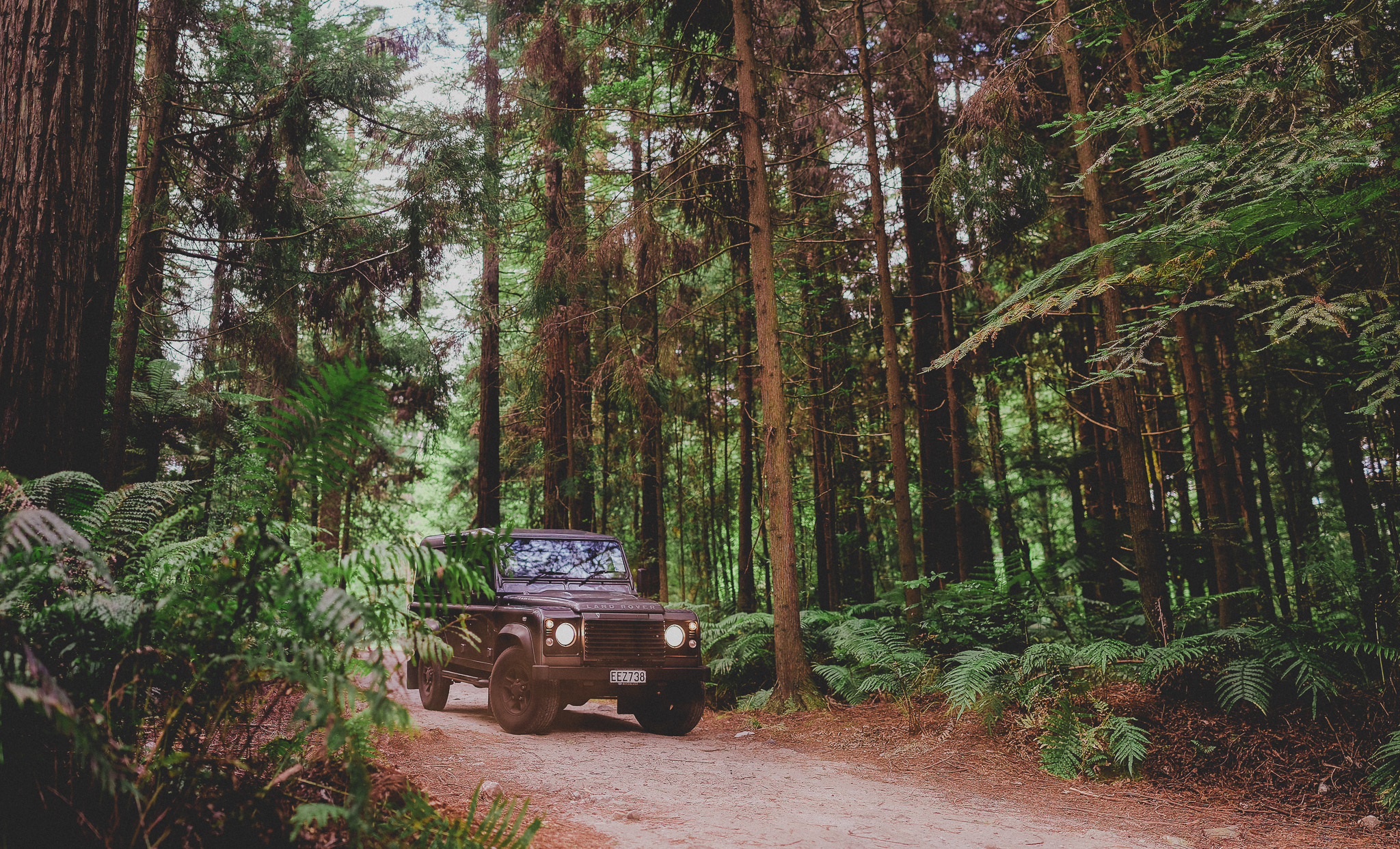 160107 Defender Redwood.jpg