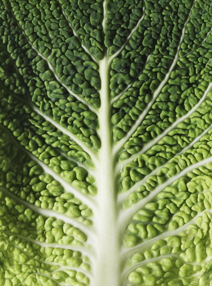 24_leaf1.jpg