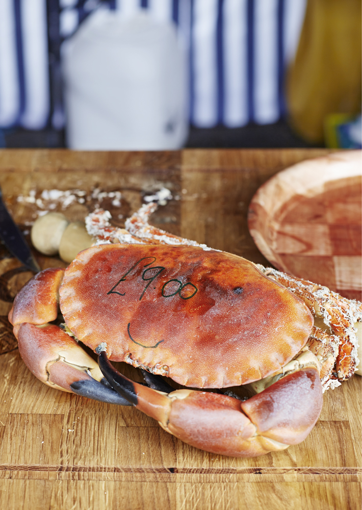 1_crab.jpg