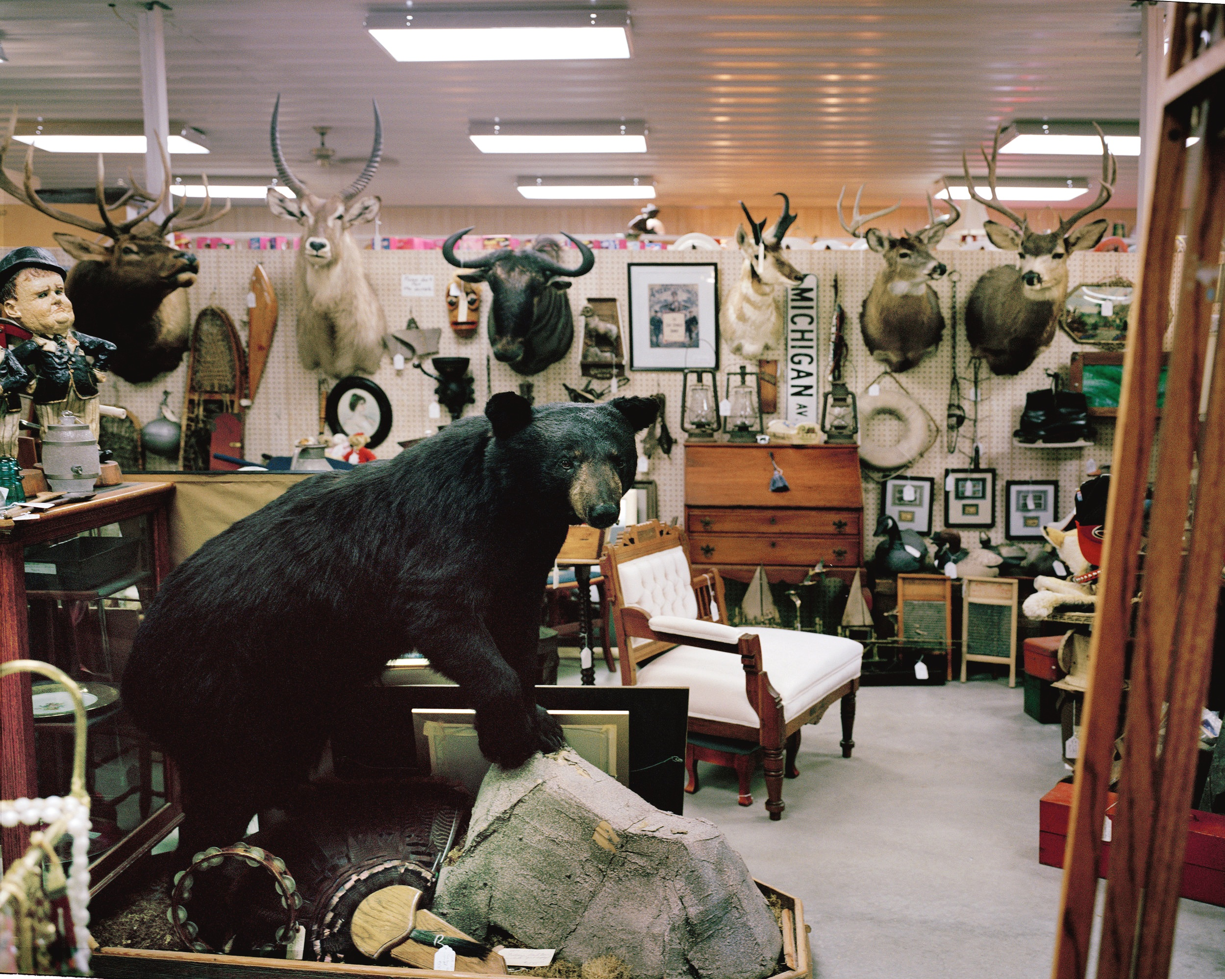 WISC-Taxidermy.jpg