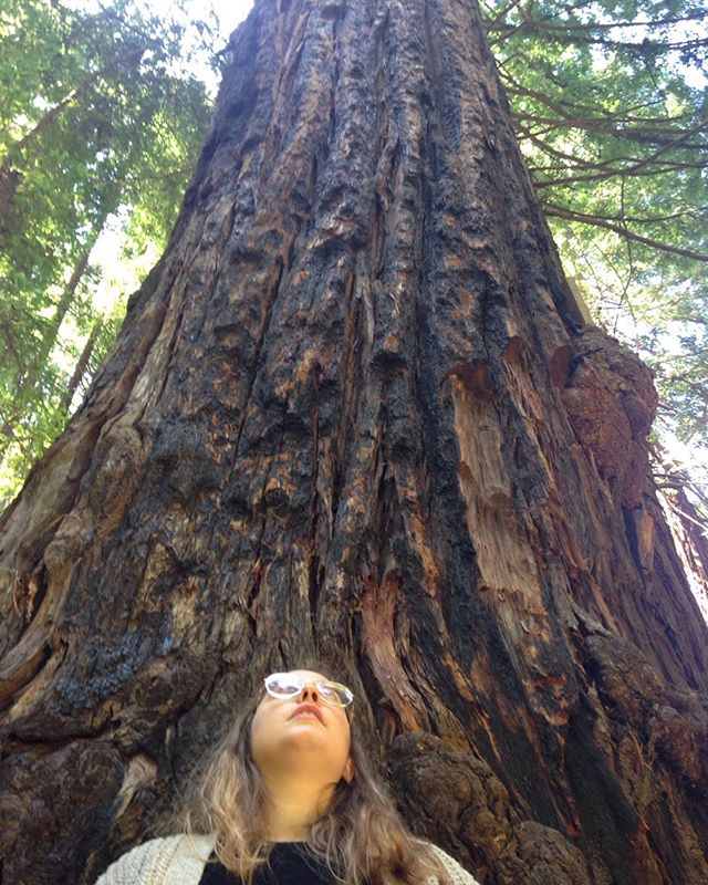 Redwoods become more resistant to fire as they age and grow. 🌲