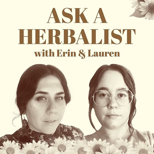 You guys!!! This is launching in one week!!! @erinlovellverinder and I are hosting an IG TV show where we answer your burning herbal questions... With lots of LOLs in-between. Stay tuned for more info and a chance to submit your questions. 🌱🥰🌱🥰🌱🥰