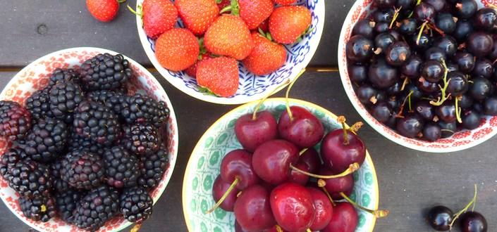 purple-berries