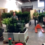 readying plants at the warehouse