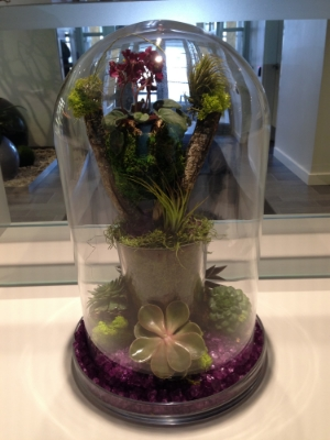 Succulent Arrangement in Mississauga Office Lobby