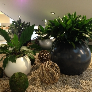 Designer look with office plants in corproate Toronto Offices
