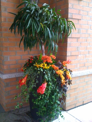 Outdoor Planter Arrangement at Toronto Condominium