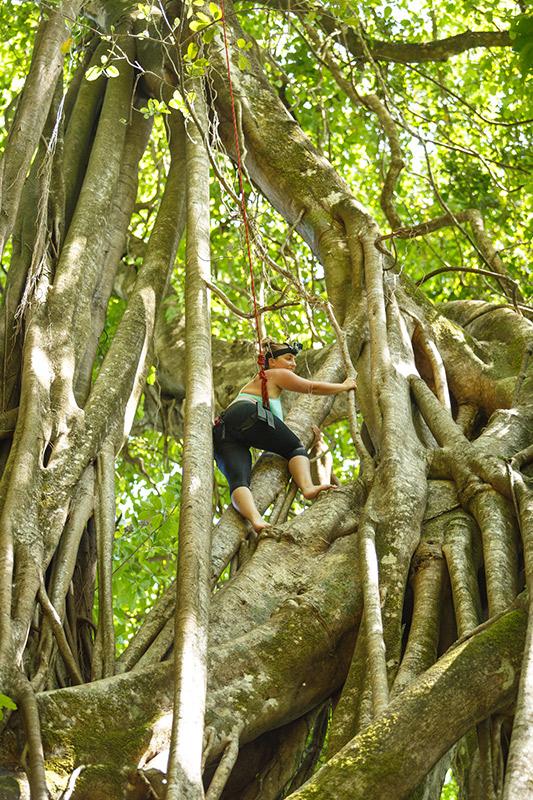 Tree Climb