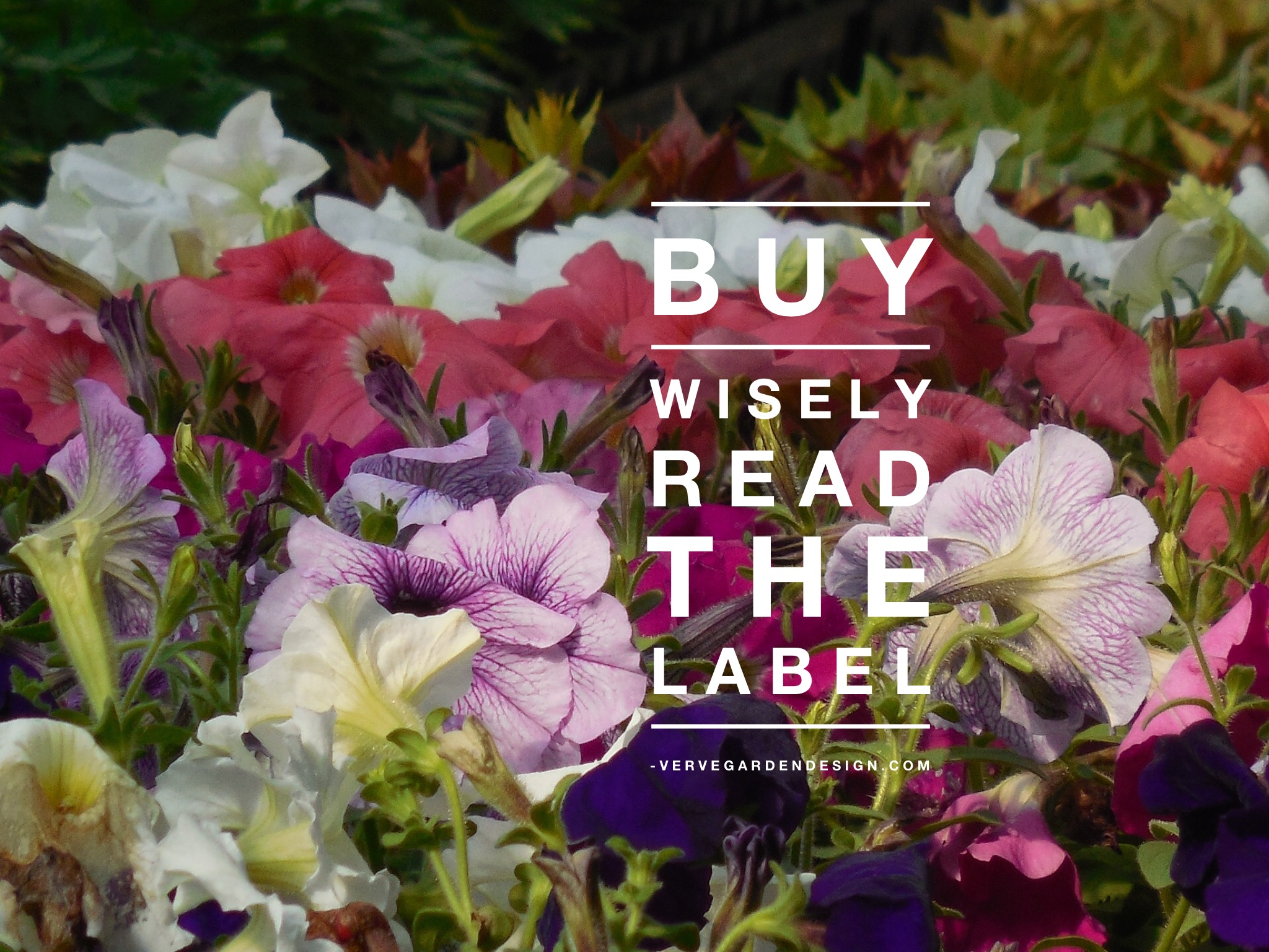Don't just buy a plant because you like the look: check the label to see if it will thrive in your garden
