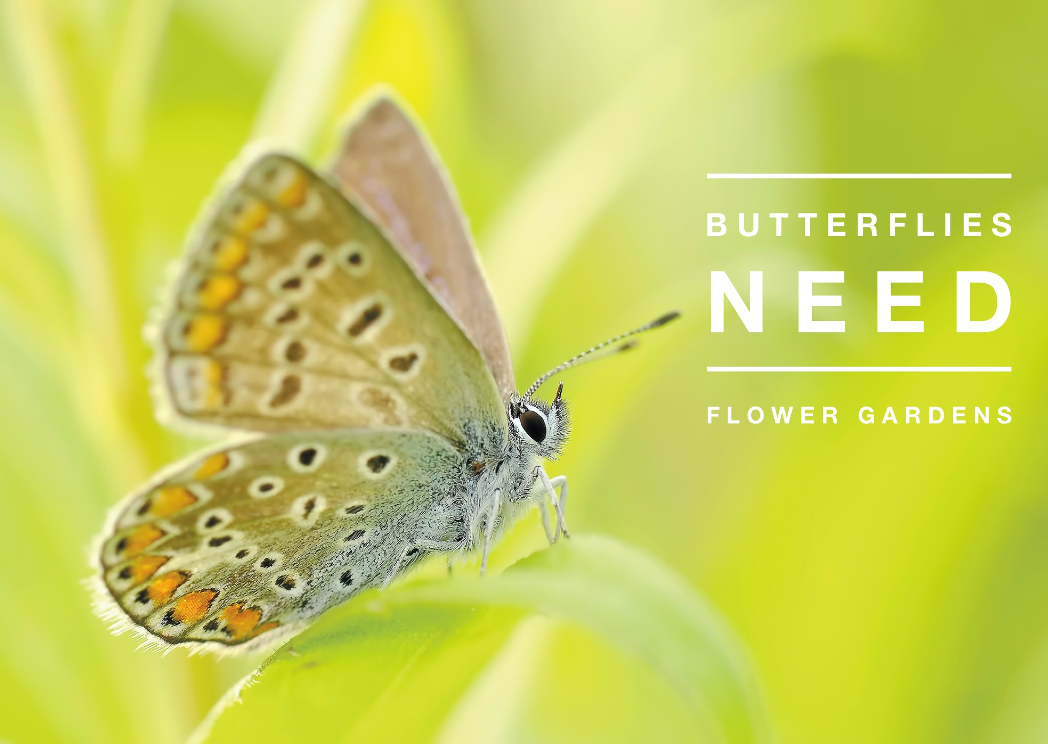Fill your house with blooms and butterflies with nectar: Check out The Cutting Garden for more tips