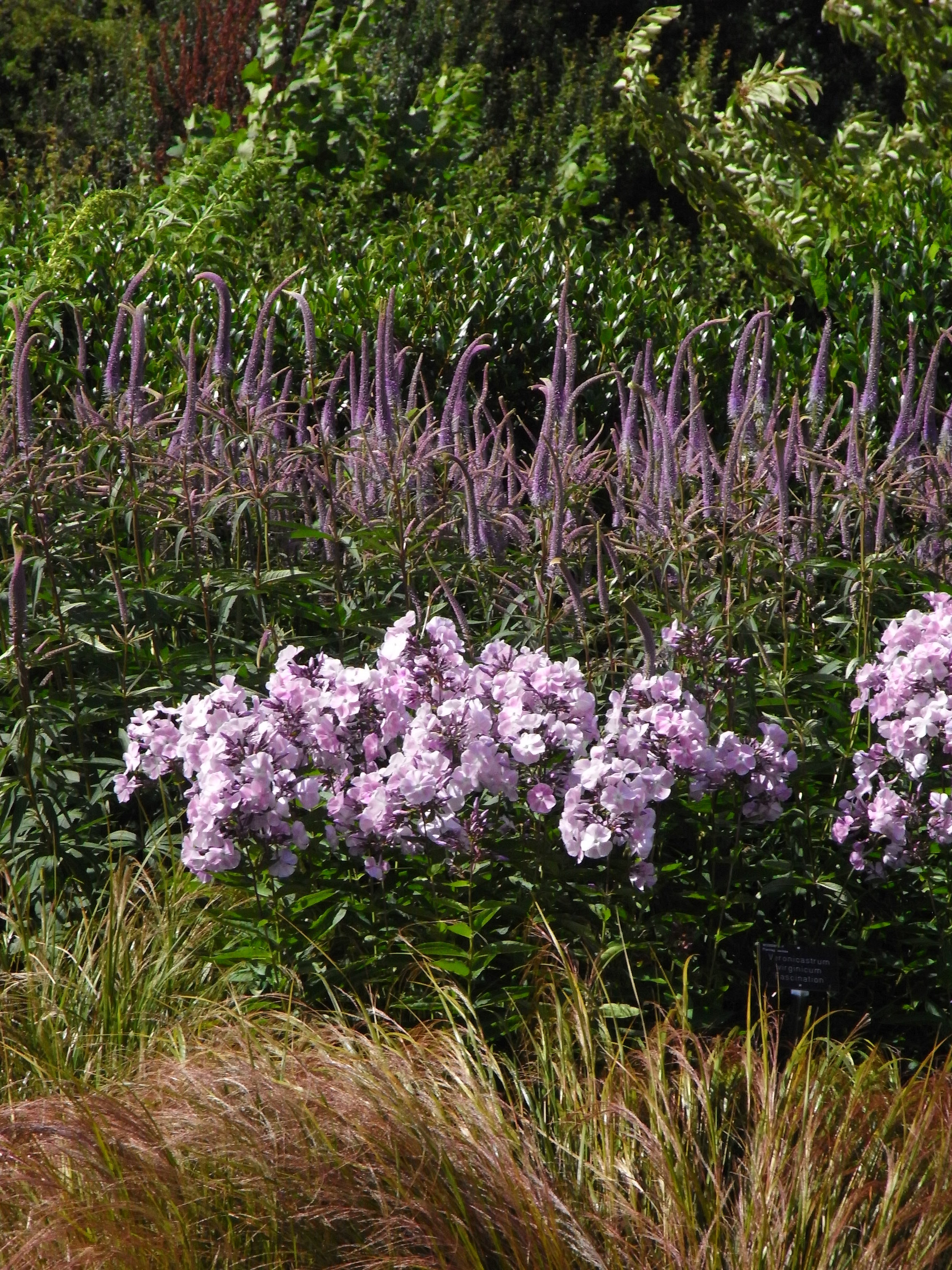 Stunning Late Summer Planting at RHS Wisley. Image: Lorraine Young, Verve Garden Design.JPG