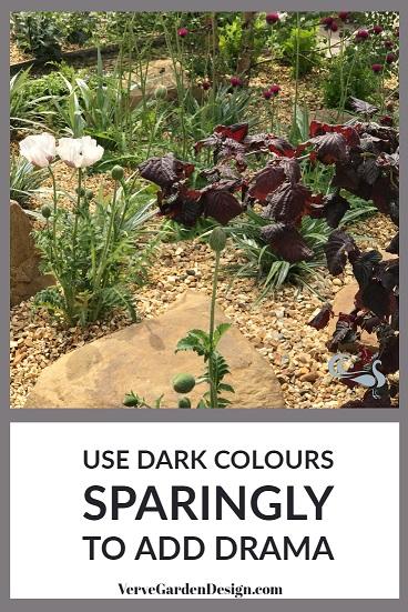 Dark Purple Hazel Leaves Contrast Well With Golden Stone. Designer: Jo McCreadie for Marshalls Paving. Image: Lorraine Young/Verve Garden Design