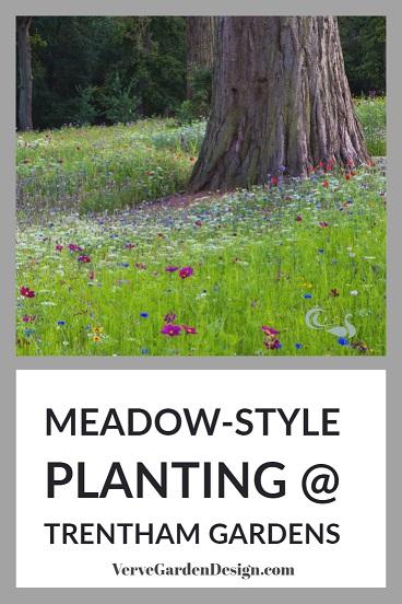 Pictorial Meadow Seed Mix by Nigel Dunnett at Trentham Gardens including Queen Anne's Lace (Ammi majus), Blue Cornflower (Centaurea cyanus), Scarlet Red Flax (Linum grandiflorum), Yellow Coreopsis tinctoria and Pink Cosmos bipinnatus.  Image: Chris Denning/ Verve Garden Design.