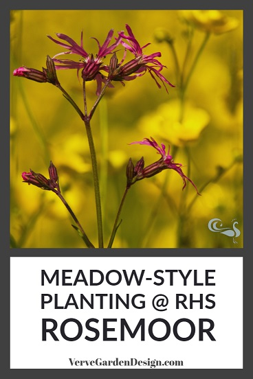 Ragged Robin (Lychnis flos-cuculi) and Buttercups in the RHS Rosemoor Wildflower Meadow.   Image: Chris Denning/Verve Garden Design.