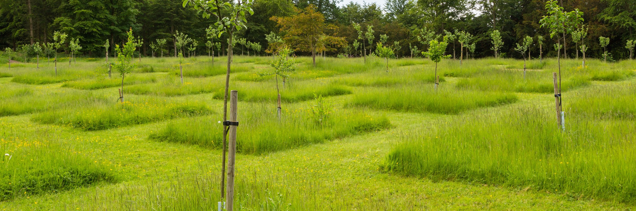 Squares of Unmown Meadow in the Orchard at Lowther Castle. Image: Chris Denning/Verve Garden Design.