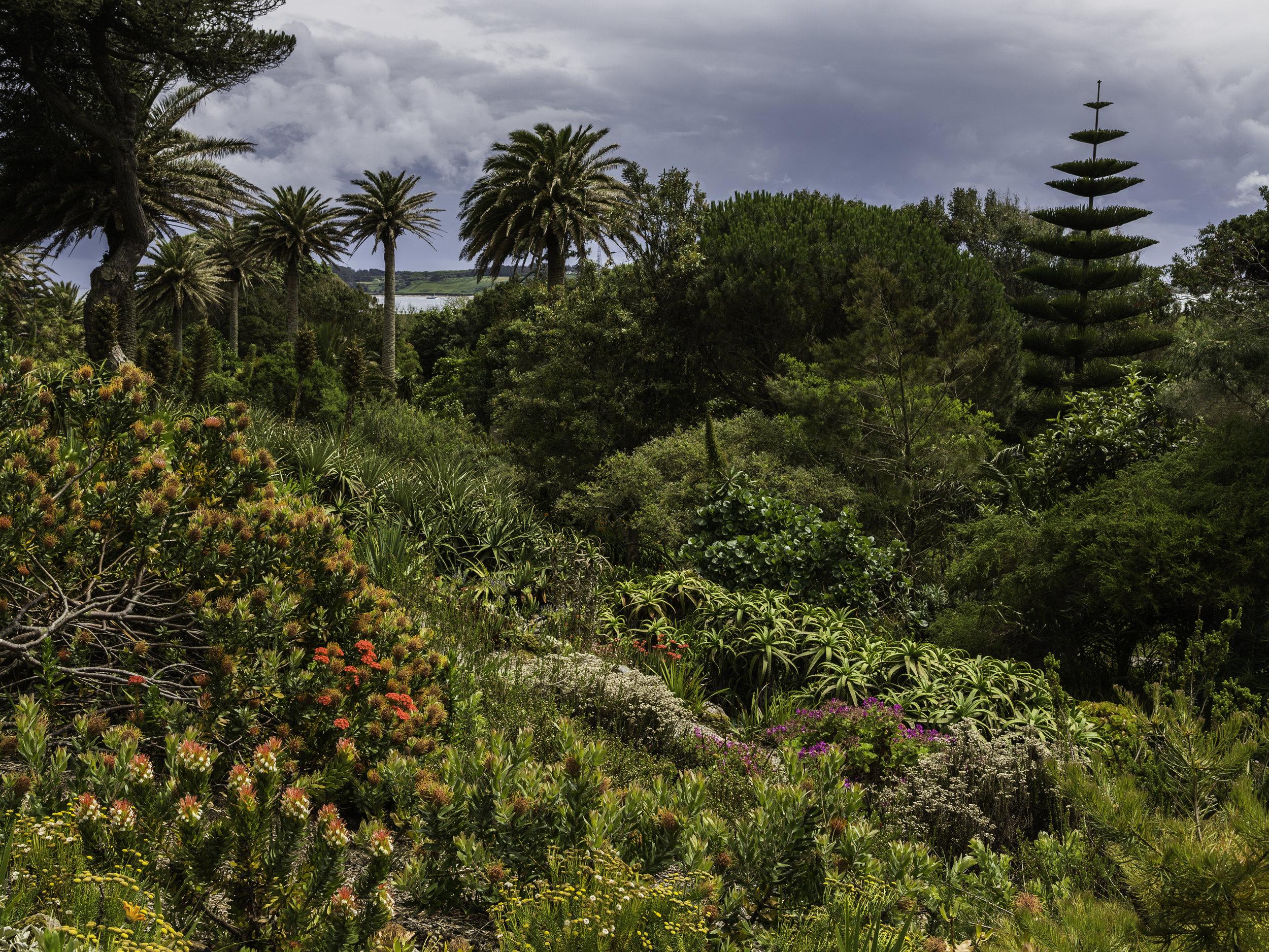 """Kew Without The Glass"". Tresco Abbey Garden, Tresco.Image: Chris Denning/Verve Garden Design."