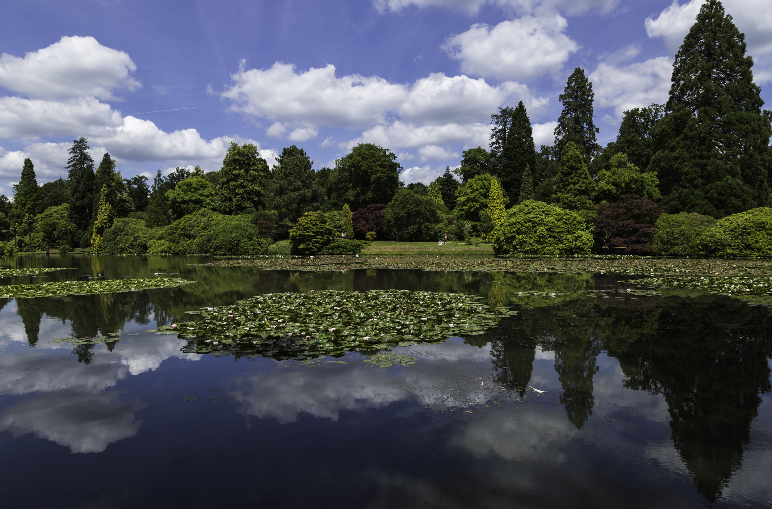 Stunning Collection of Trees and Waterlilies at NT Sheffield Park in August.  Image  Chris Denning/Verve Garden Design.