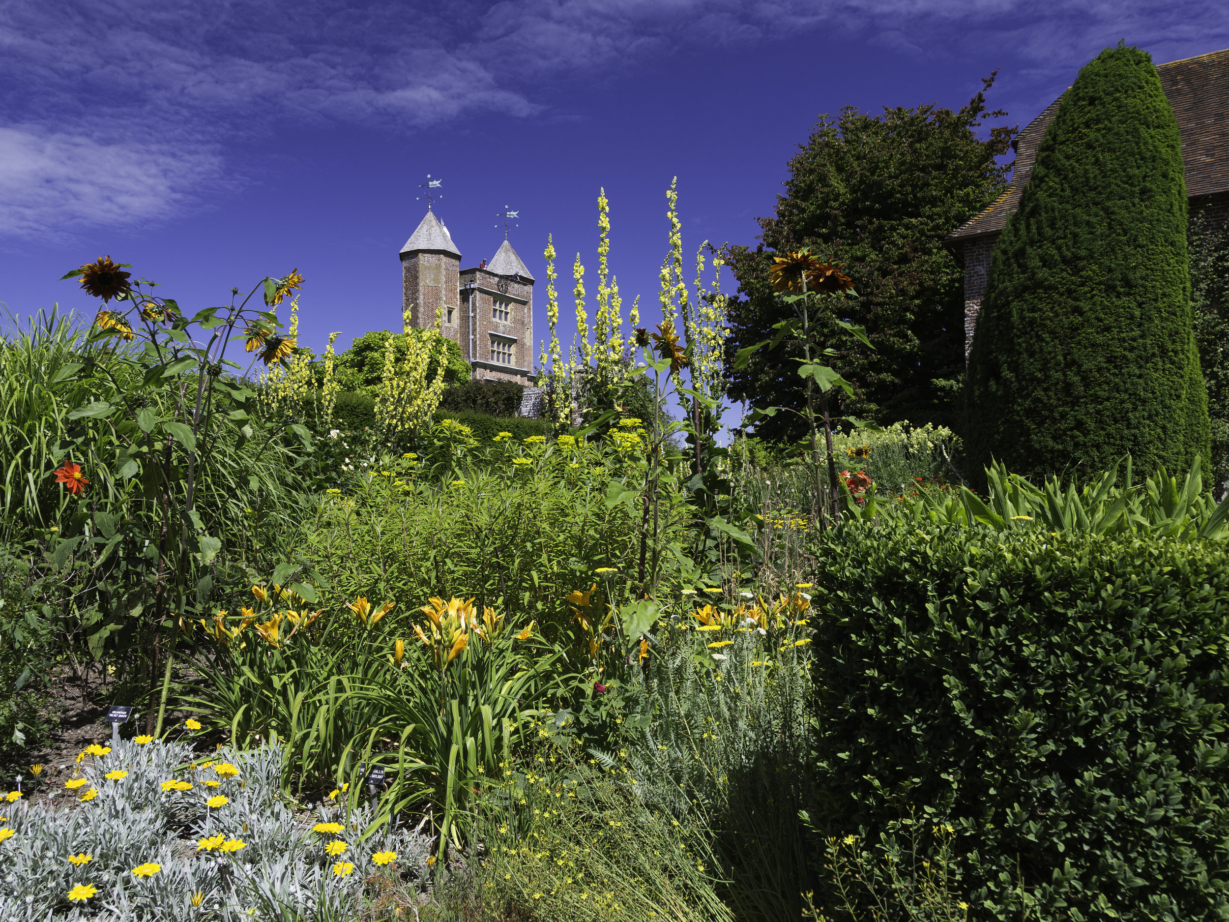Gold dominating the NT Sissinghurst Castle South Cottage Garden in August.   Image:   Chris Denning/Verve Garden Design.