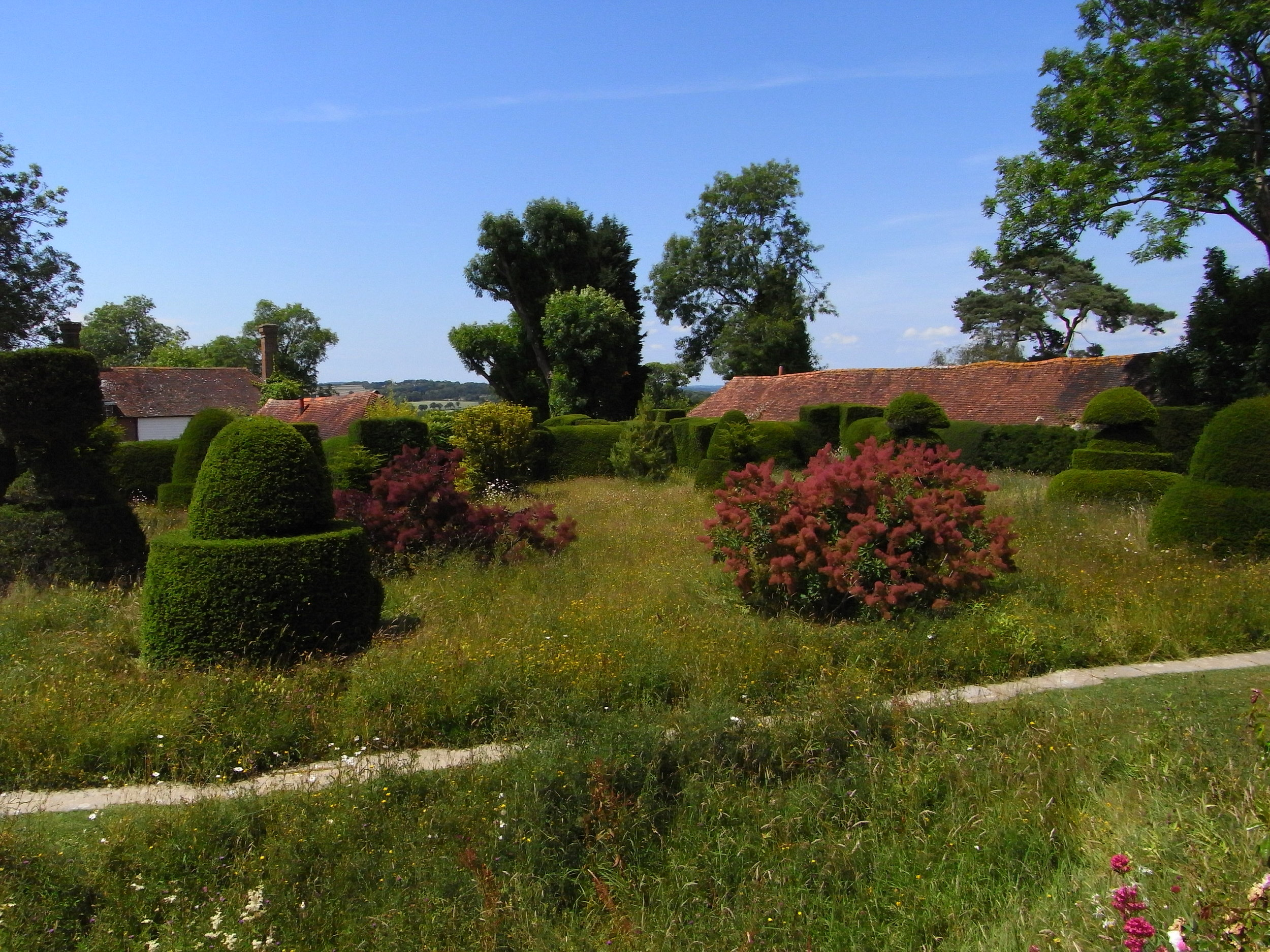 Yew Topiary, Cotiinus and a Meadow Combined at Great Dixter.   Image: Lorraine Young/ Verve Garden Design