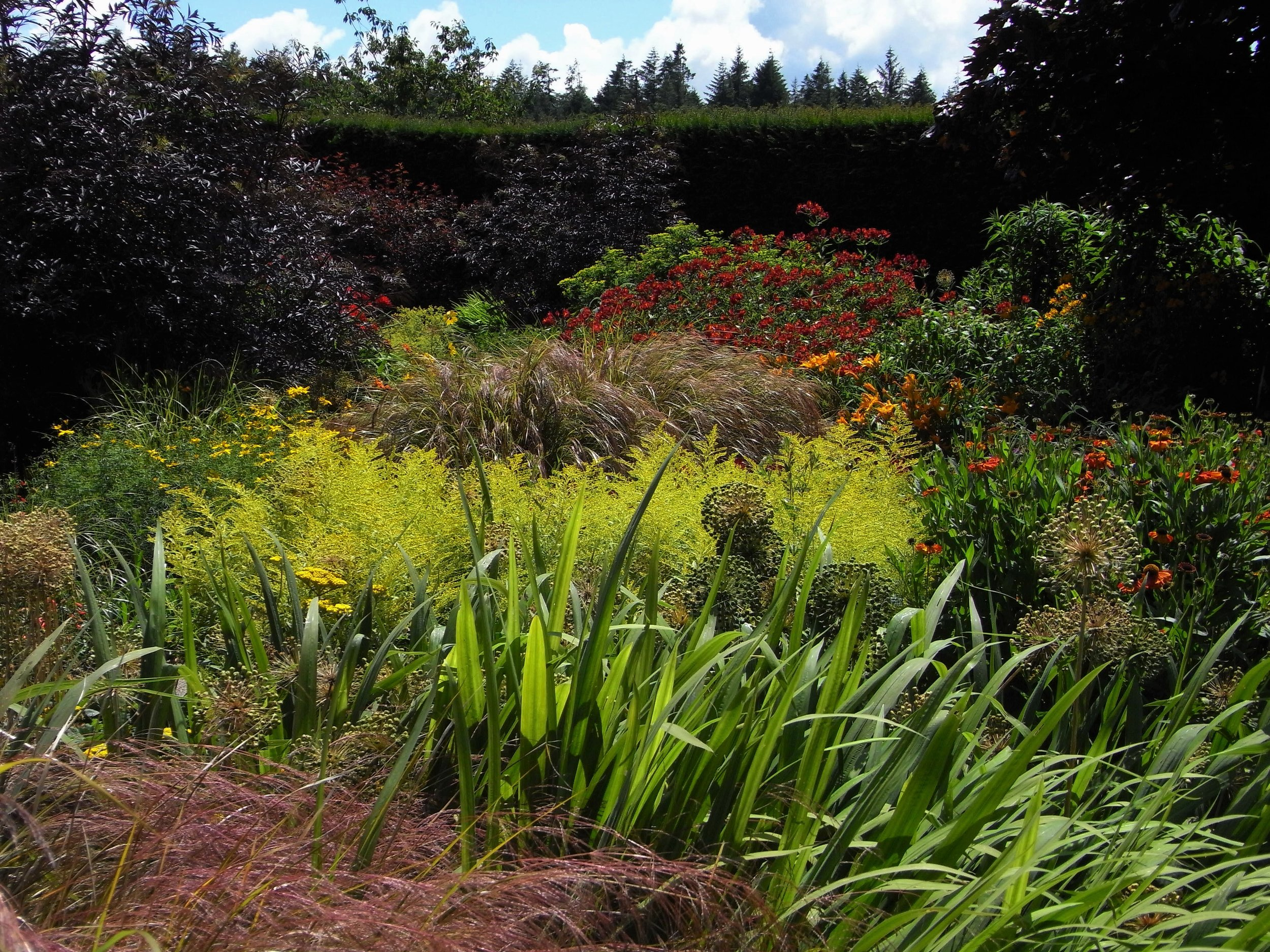 August Drama in the Rosemoor Hot Border.  Image: Lorraine Young /Verve Garden Design.