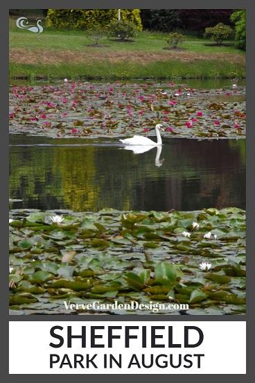 Swan reflection amongst the waterlilies at NT Sheffield Park Garden. Image: Lorraine Young/Verve Garden Design.