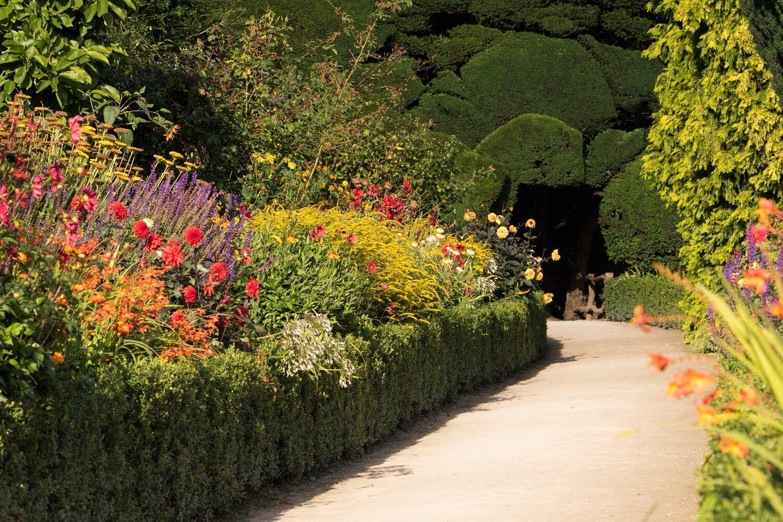 Hot Late Summer Colours in the Powis Castle Terraces. Garden: National Trust. Image: Chris Denning/ Verve Garden Design.