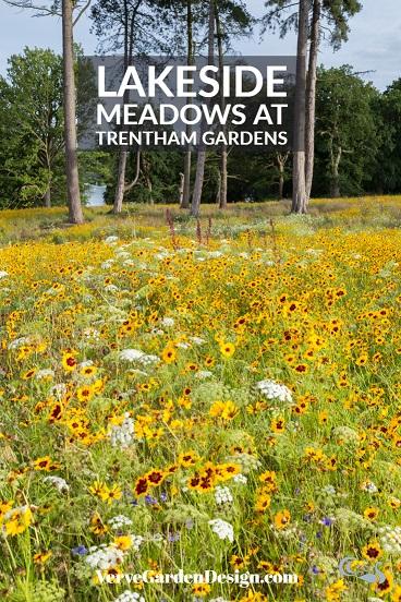Yellow Nigel Dunnett September meadow at Trentham. Image: Chris Denning/ Verve Garden Design.