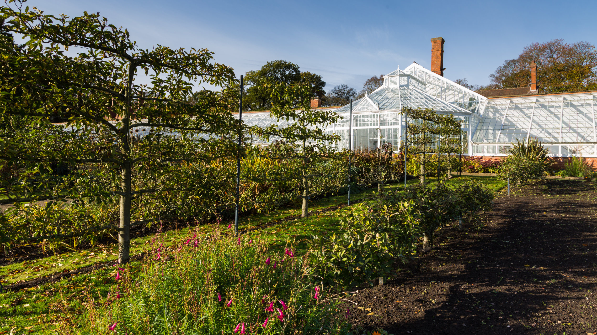 Espalier apples in front of the Long Range Glasshouse at Clumber Park. Image: Chris Denning/ Verve Garden Design.