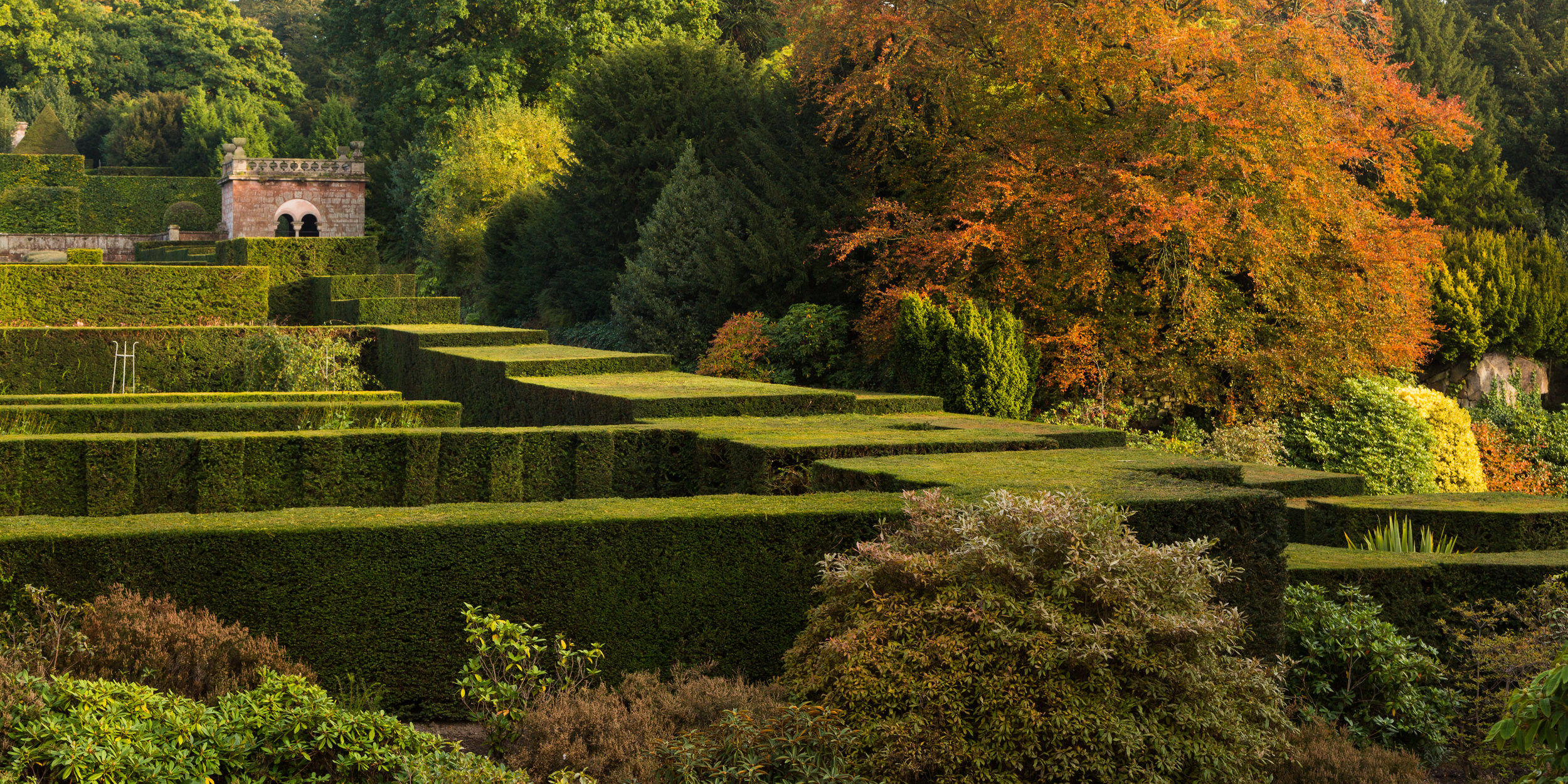 Yew Hedge Parterres and Autumn Trees at Biddulph Grange. Image: Chris Denning/ Verve Garden Design.