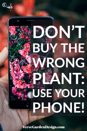 When plant shopping, get help from your phone