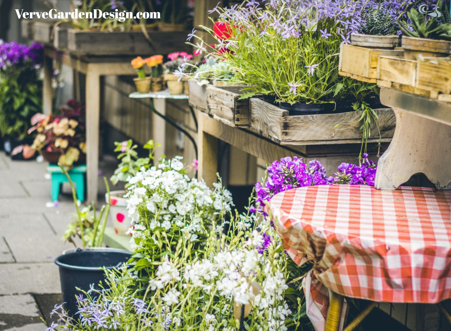 How do you decide which plants to buy for your garden?