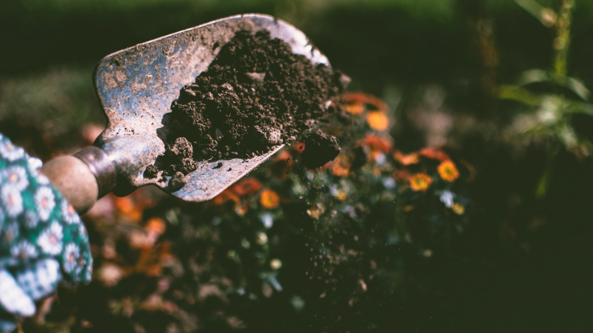 How To Check Out Your Garden Soil.jpg