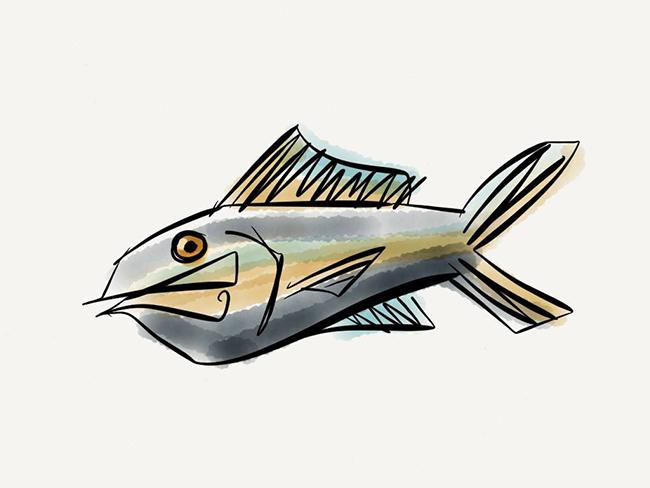 whimisicalfish.jpg