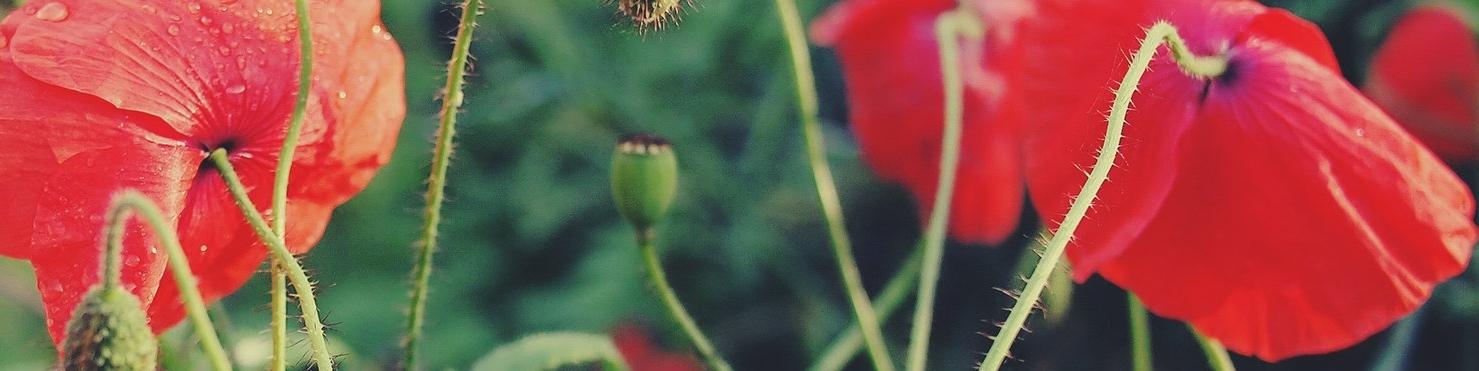 Zahnarztpraxis Berlin Mitte dentist Zahnarztpraxis Berlin Prenzlauerberg Postleitzahl 10115 Aesthetische Zahnheilkunde Zahnaesthetik bleaching weisse Zaehne Prophylaxe professionelle Zahnreinigung Veneers Amalgamsanierung Parodontologie Zahnfleischbehandlung Wurzelkanalbehandlung Endodontologie Implantate Bleaching Angstpatienten Kinderbehandlung digitales Roentgen online Termine Englisch English 10117 10119 10435 10178 10179