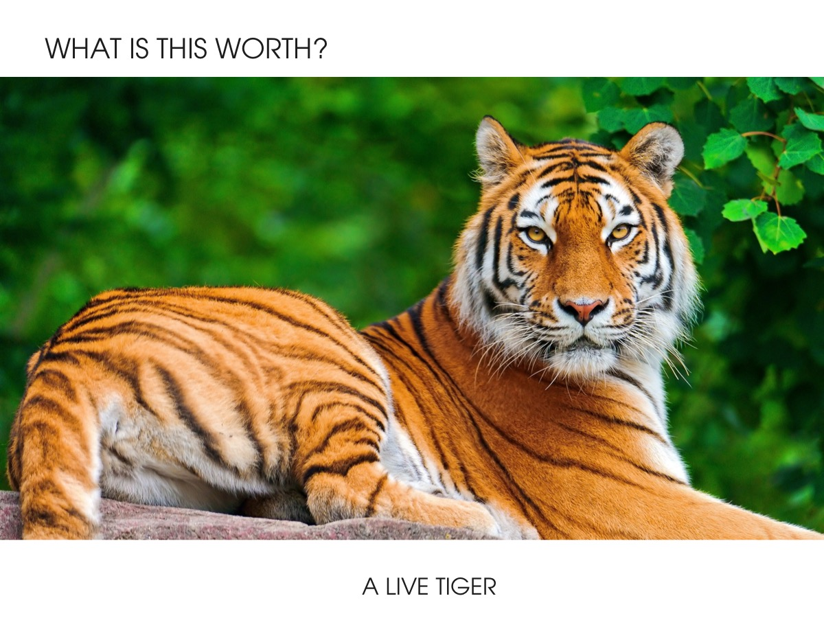 What is a live Tiger worth?