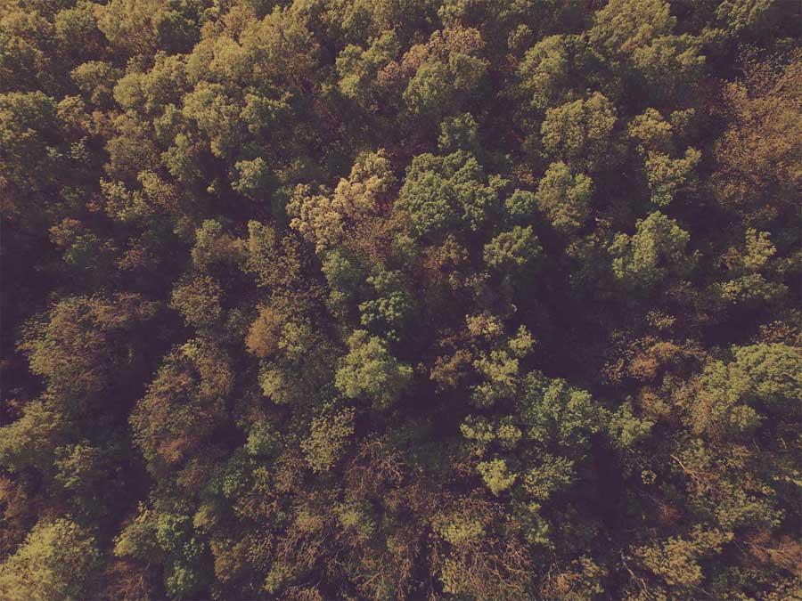 Forest Flights