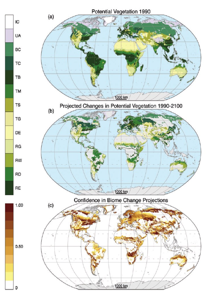 vegetation projections (a) Mci-modeled potential vegetation under observed 1961-1990 cliamte. (b) mci-modeled potential vegetation under projected 2071-2100 climate where any of nine general circulation model-emissions scenario combinations projects a change. biomes, in (a) and (B), from poles to equator: ice (ic), tundra and alpine (UA), boreal conifer forest (bc), temperate conifer forest (TC), temperate broadleaf forest (tb), temperate mixed forest (tm), temperate shrubland (ts), temperate grassland (tg), desert (de), tropical grassland (rg), Tropical woodland (rw), tropical deciduous broadleaf forest (rd), and tropical everygreen Broadleaf forest (re). (c) confidence of biome projections calculated from fraction of general circulation model-emissions scenario combinations that project the same time of biome change.