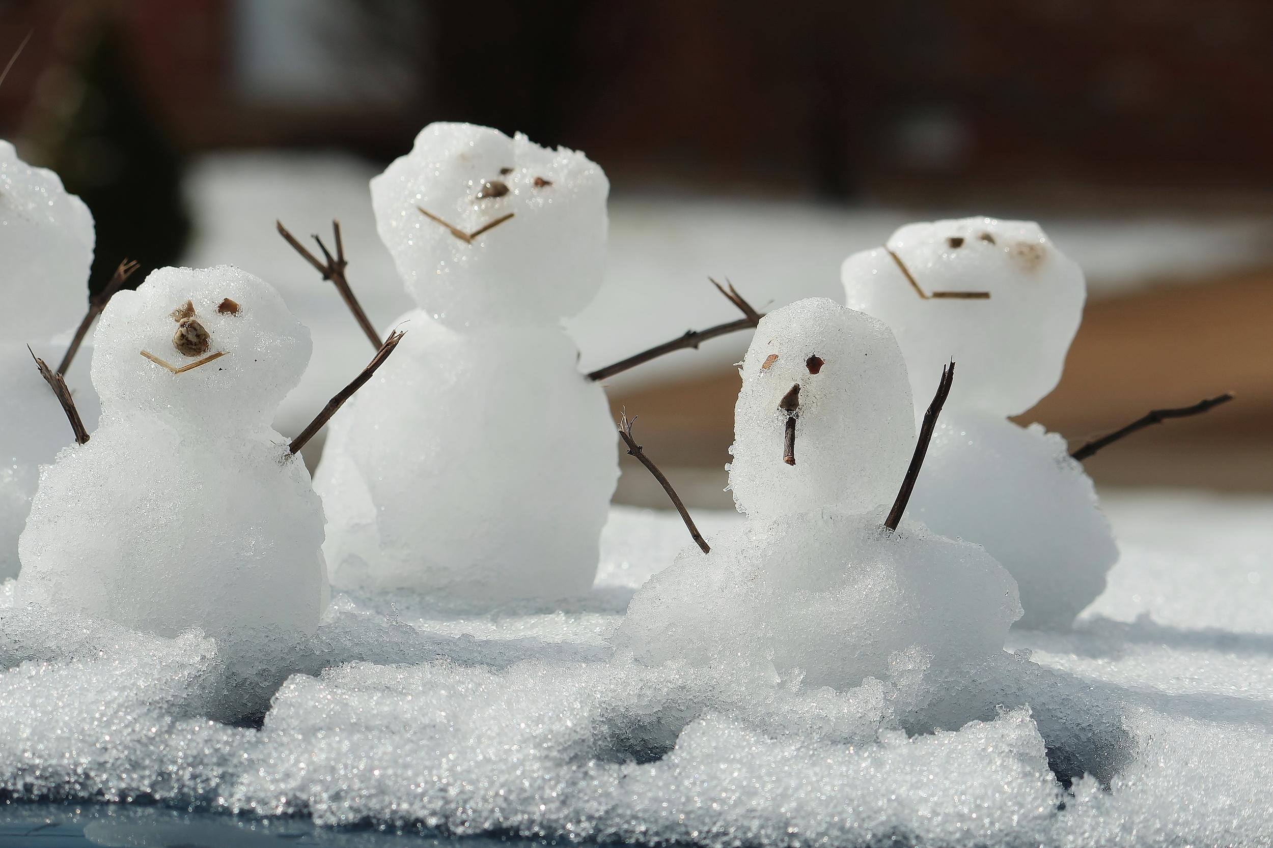 Schneegäste