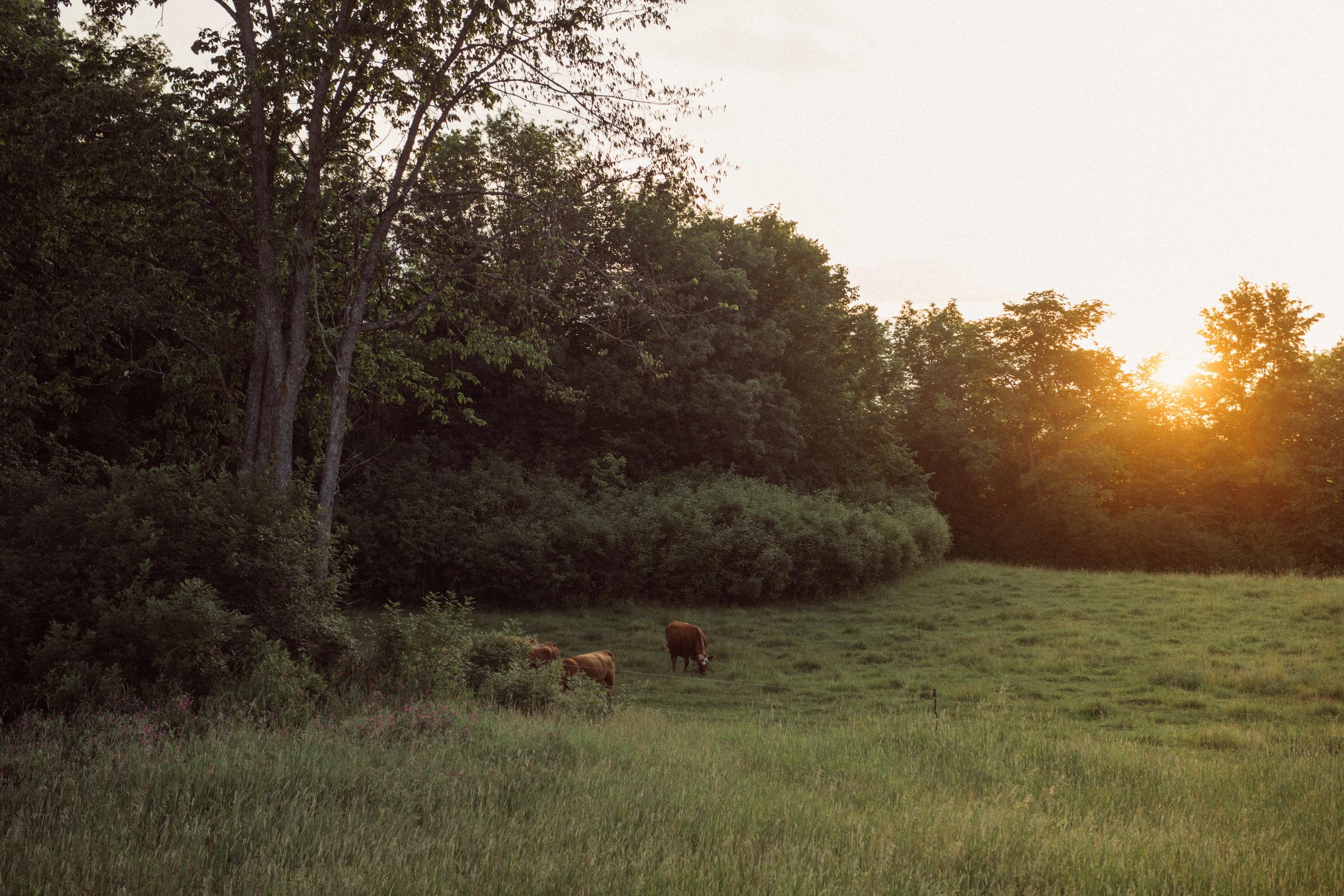 Rodan-Farmhouse-070719-022.jpg
