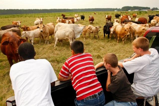 kids n cows.jpg