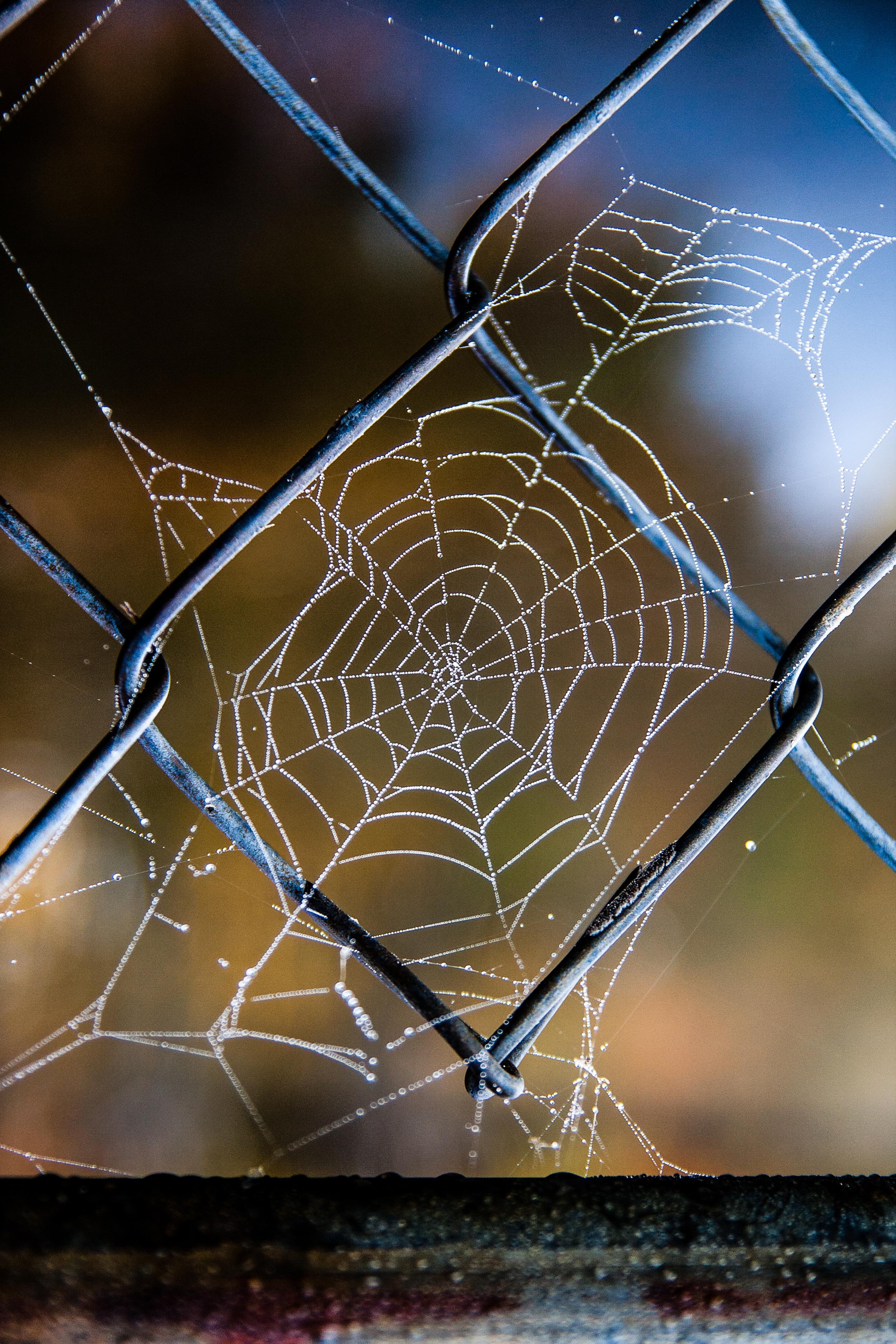 cobweb fence.jpg