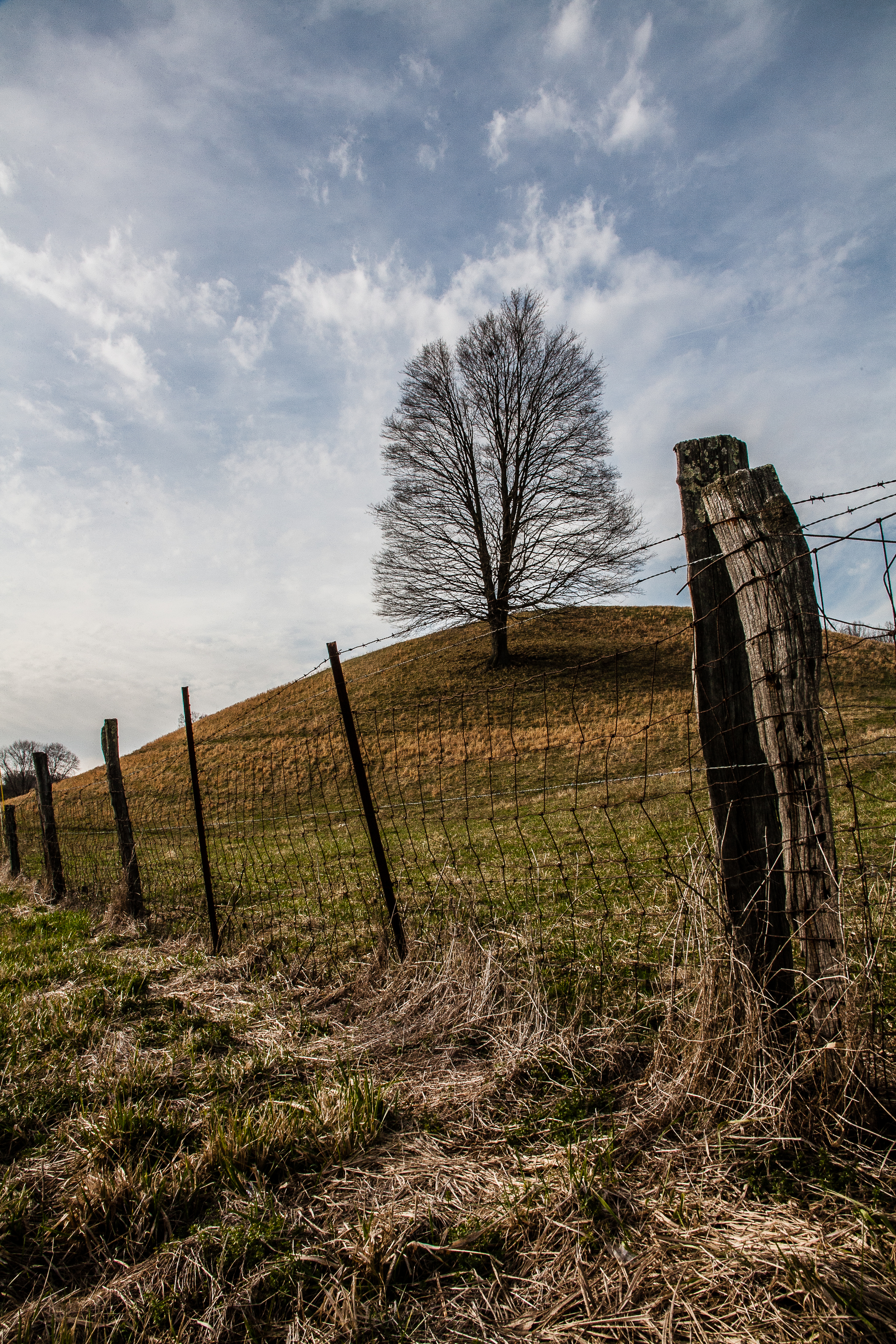 fence post with hill and tree.jpg