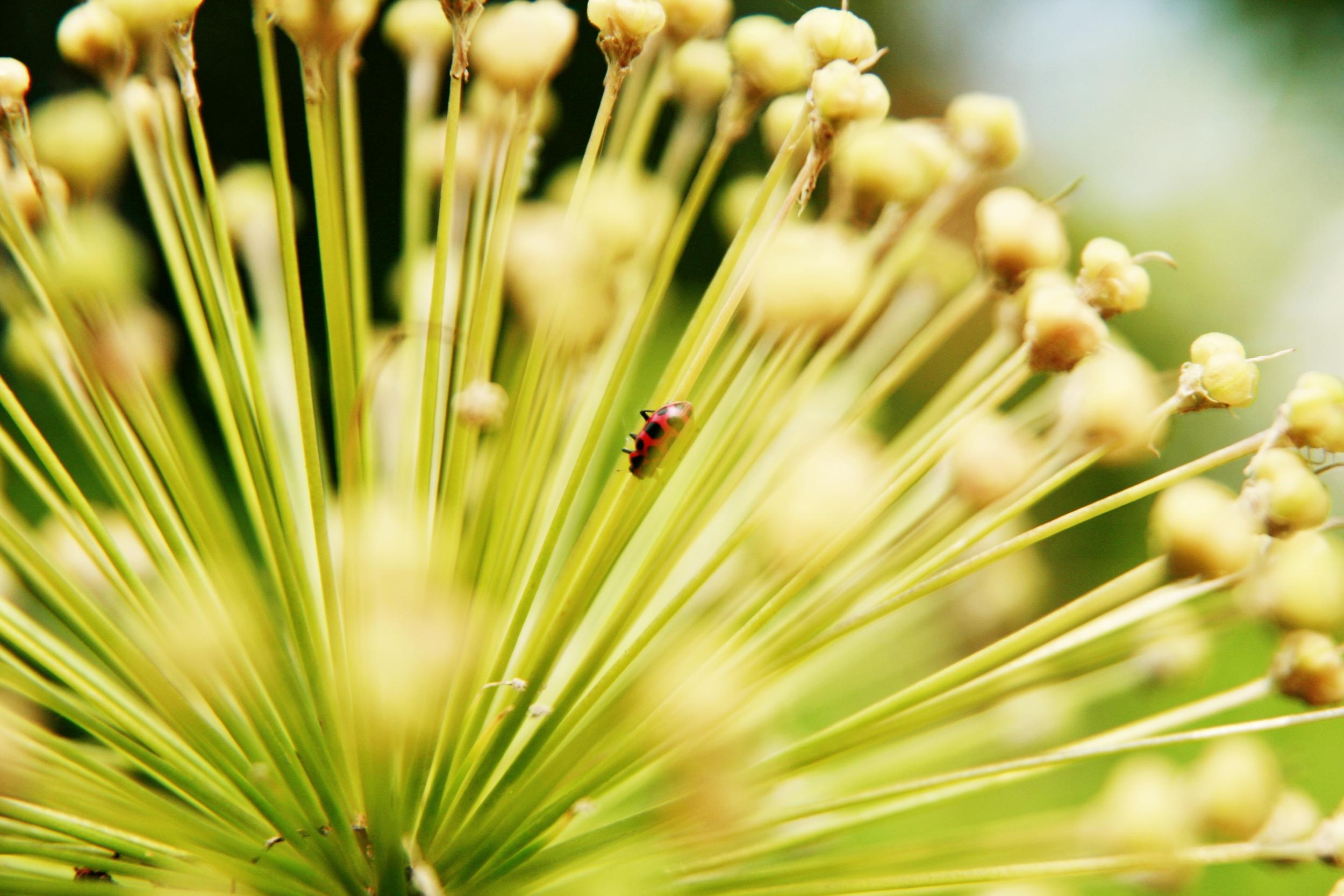Ladybug2,green,red.jpg